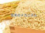 【玄米ダイエットのメカニズム】そもそも玄米ってなぜ痩せるの?
